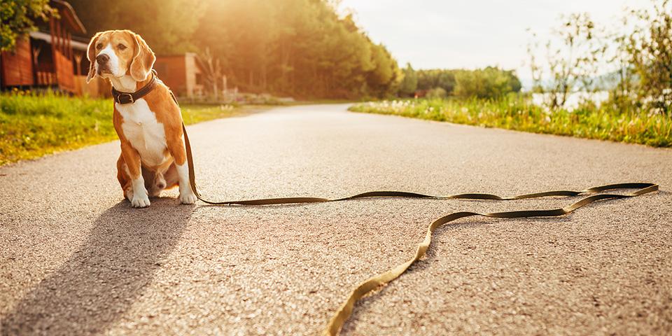 amivedi-hond-met-lijn-kopieren