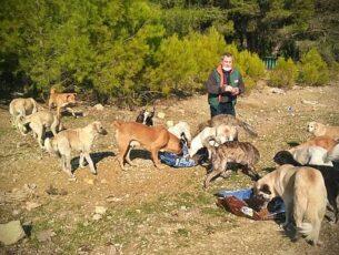 stichting-dierennood-hulpproject-139-9-hero