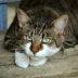 cats-eyes-2671903_1920 kopiëren