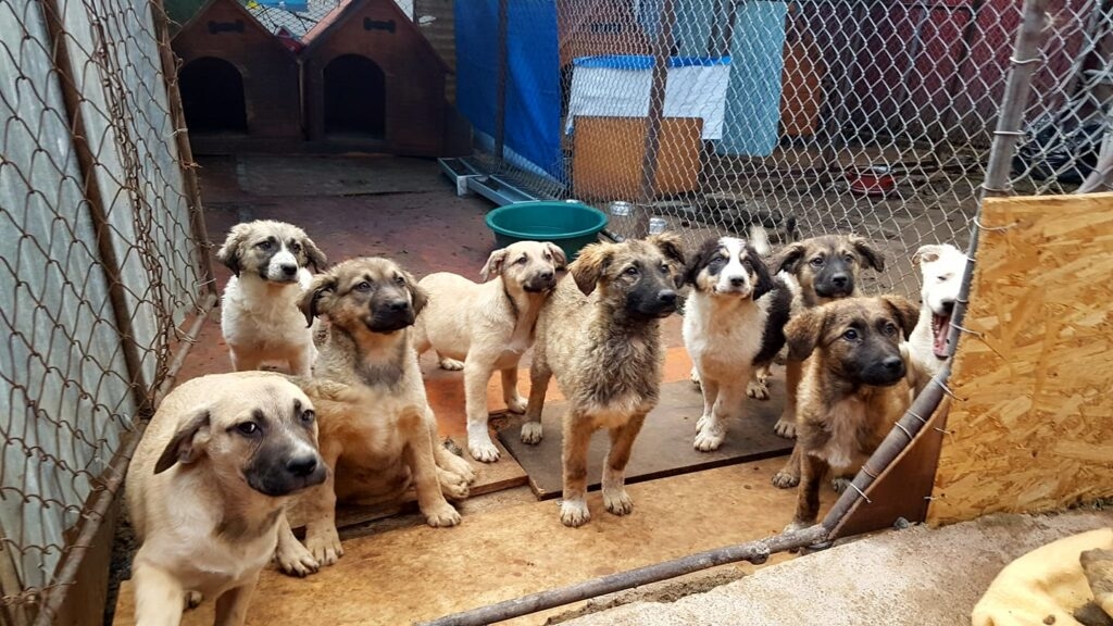 stichting-dierennood-hulpproject-142-12
